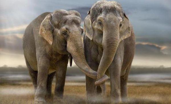 Μέλισσες προστατεύουν δέντρα από τους ελέφαντες