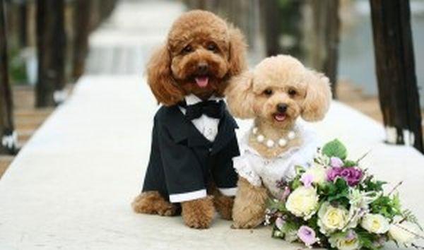 5.000 καλεσμένοι σε... γάμο σκύλων!