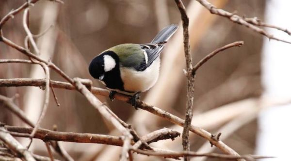 Πουλί-φιλόλογος κελαηδάει με σύνταξη
