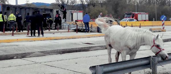 15 άλογα νεκρά σε τροχαίο στην Εγνατία