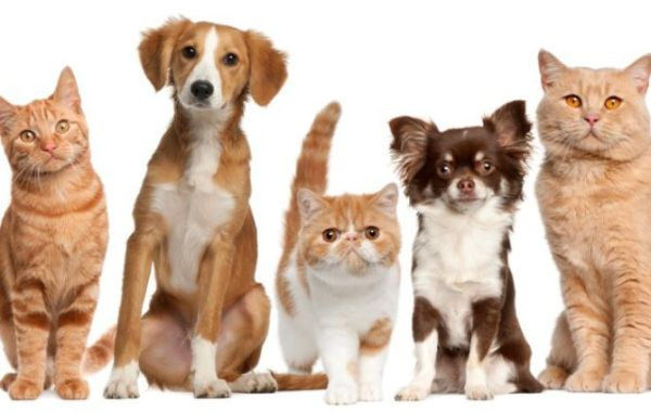 Ημέρα υιοθεσίας αδέσποτων ζώων