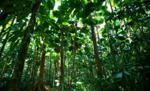 Τα δέντρα προσαρμόζονται στην κλιματική αλλαγή