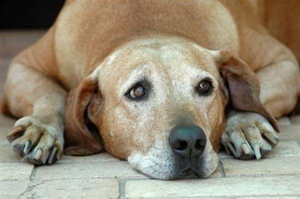 Πυροβόλησε και τραυμάτισε σκύλο σε χωριό του Έβρου