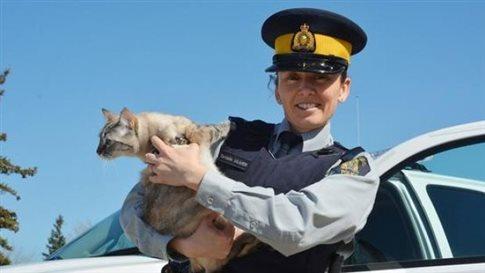 Πρωταπριλιά με αστυνομικές γάτες και υπηρεσίες ταξί χωρίς... οχήματα