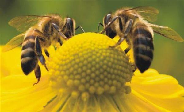 Η εντυπωσιακή κατανομή εργασίας των μελισσών