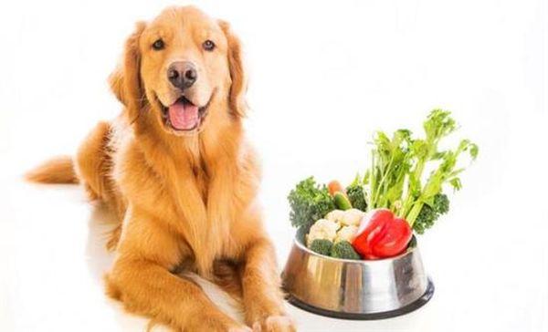 Ποια φρούτα και λαχανικά επιτρέπεται να τρώει ο σκύλο σας