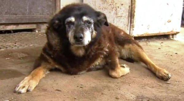 Πέθανε ο γηραιότερος σκύλος στον κόσμο