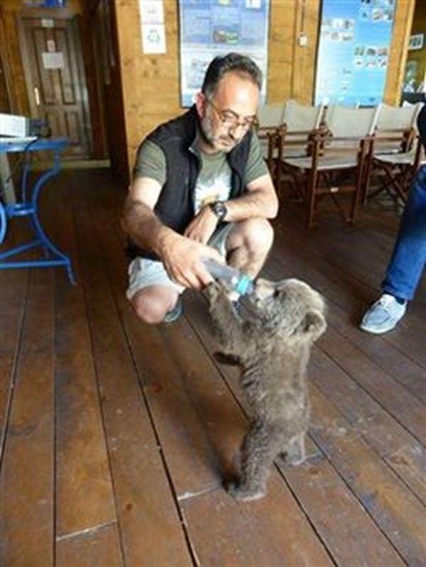 Καστοριά: Αρκουδάκι 40 ημερών επανασυνδέθηκε με τη μαμά του