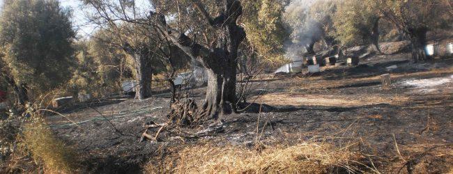 Πυρκαγιά σε ελαιοπερίβολο στο Διμήνι