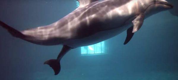 Καρέ καρέ η γέννηση δελφινιού (βίντεο)