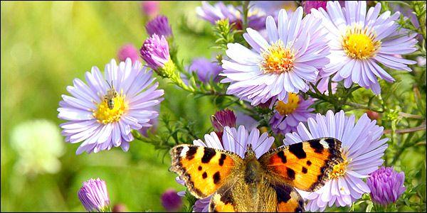 Η ζωή ξυπνάει στη φύση την άνοιξη σε ένα υπέροχο βίντεο!