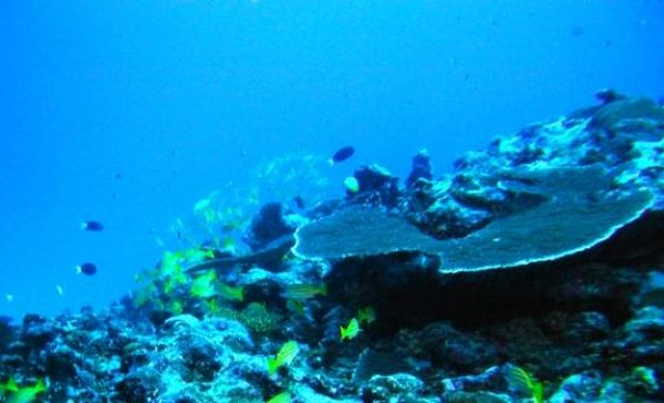 Ακόμη και στο βαθύτερο σημείο των ωκεανών έχει φασαρία!