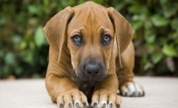 Πώς μπορείτε να περιορίσετε την τριχόπτωση του σκύλου σας