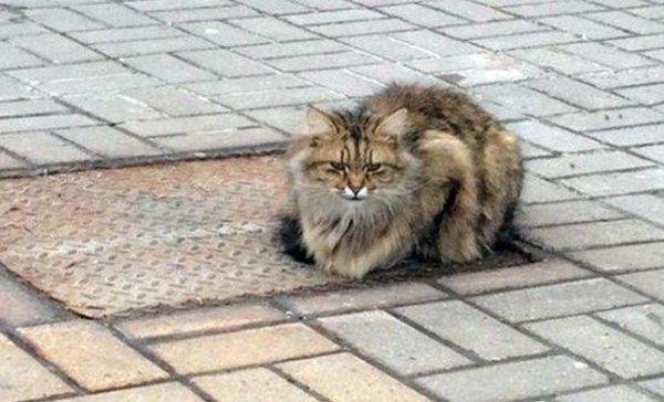Γάτα... Χάτσικο περιμένει τον ιδιοκτήτη της για πάνω από 1 χρόνο!