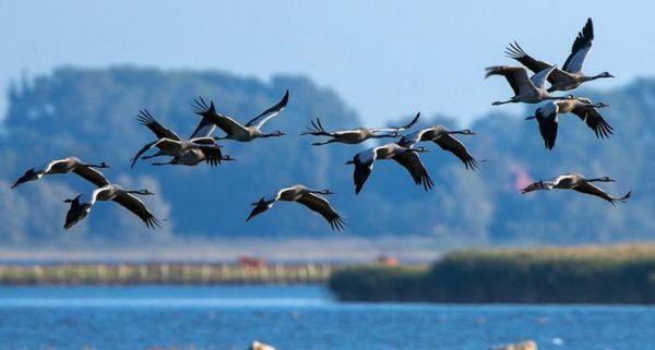Διήμερο εκδηλώσεων για την Παγκόσμια Ημέρα Μετανάστευσης των Πουλιών