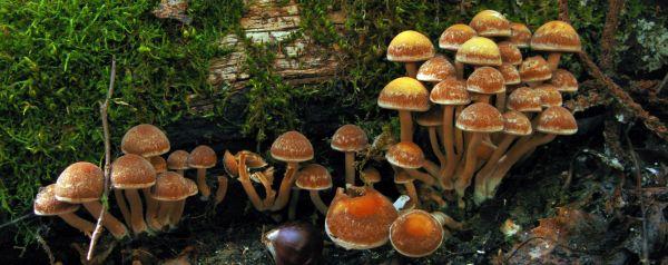 Δεκατέσσερις καλοκαιρινές δράσεις από το Μουσείο Φυσικής Ιστορίας Μετεώρων & Μουσείο Μανιταριών