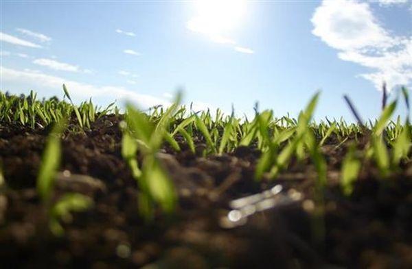 Ένα στα πέντε είδη φυτών απειλείται με εξαφάνιση