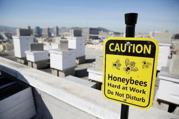 Ξενοδοχεία στο Σαν Φρανσίσκο φιλοξενούν εκτός από τουρίστες και... μέλισσες