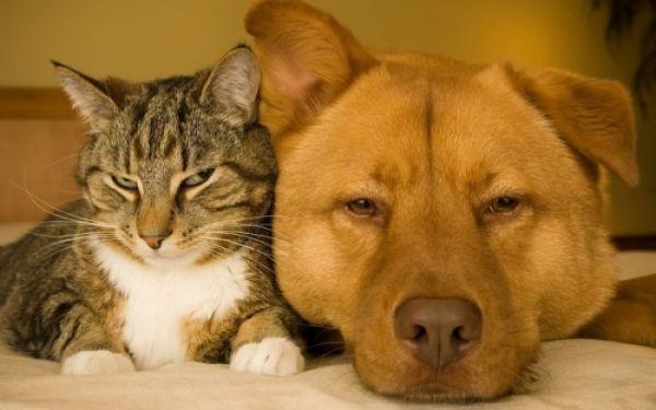 Επτά μηνύσεις για κακοποίηση ζώων