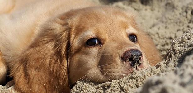 Καμπάνες για κακοποίηση ζώων - ΚΑΤΑΔΙΚΕΣ ΜΕΧΡΙ ΤΡΙΑ ΕΤΗ