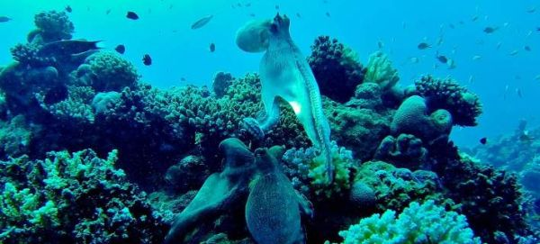 Χταπόδια, καλαμάρια και σουπιές κατακτούν τις θάλασσες