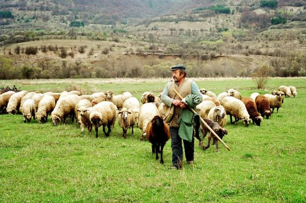 Σύσκεψη κτηνοτρόφων