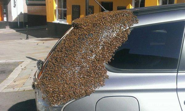 Βρετανία: Σμήνος μελισσών σκέπασε αυτοκίνητο, ψάχνοντας για την βασίλισσά του