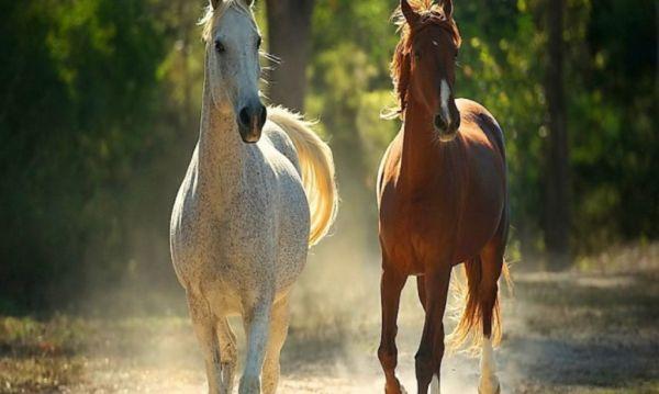Πανελλαδική ιππική συνάντηση στο Ελευθεροχώρι