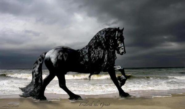 Το πιο όμορφο άλογο του κόσμου (βίντεο)