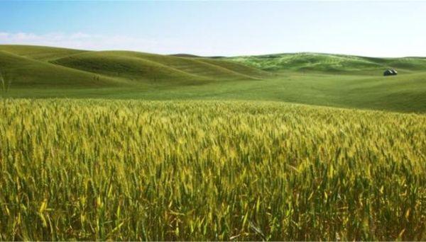 ΟΗΕ: Οι ακραίες καιρικές συνθήκες προκαλούν αύξηση των τοξινών στις καλλιέργειες