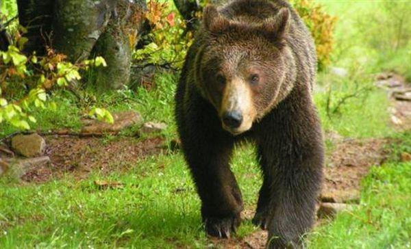 Ειδικό καροτσάκι για ένα μικρό αρκούδο με αναπηρία από τον «Αρκτούρο»