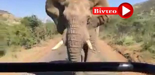 Ελέφαντας επιτέθηκε στον... Άρνολντ Σβαρτσενέγκερ κατά τη διάρκεια σαφάρι