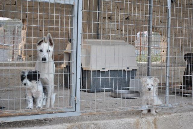 Δήμος Βόλου: Οι συκοφάντες να ζητήσουν συγγνώμη από τους πολίτες
