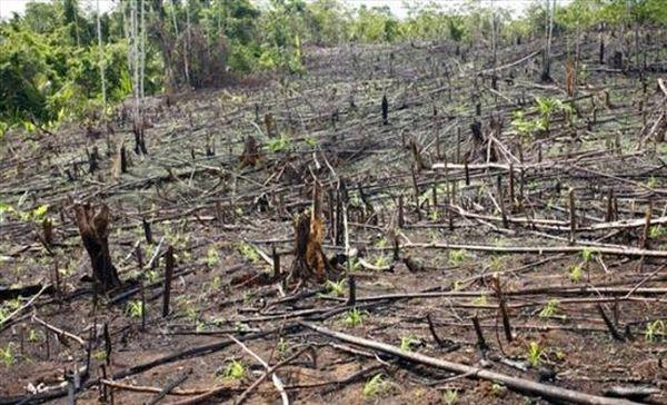 Νορβηγία: Δέσμευση μηδενικής αποψίλωσης των δασών
