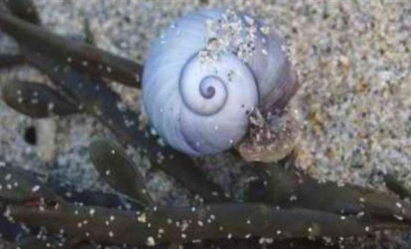 Θαλάσσια σαλιγκάρια εναντίον καρκίνου