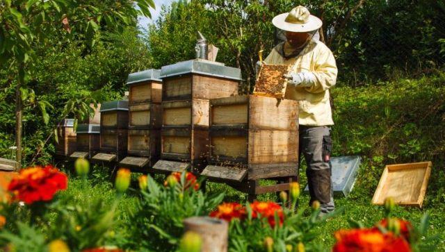 Δωρεάν σεμινάρια μελισσοκομίας σε Βόλο και Αλμυρό