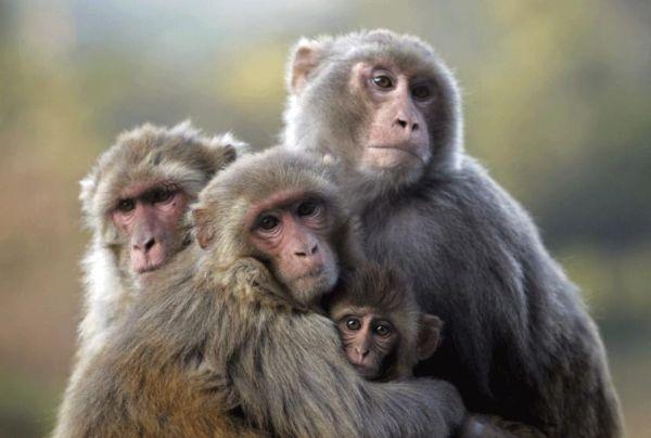 Μαϊμού προκάλεσε εθνικό μπλακ άουτ στην Κένυα