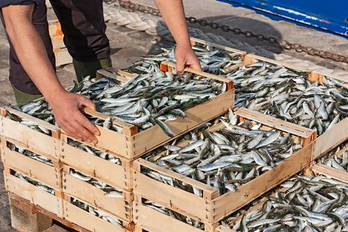 Πωλούσε ψάρια παράνομα