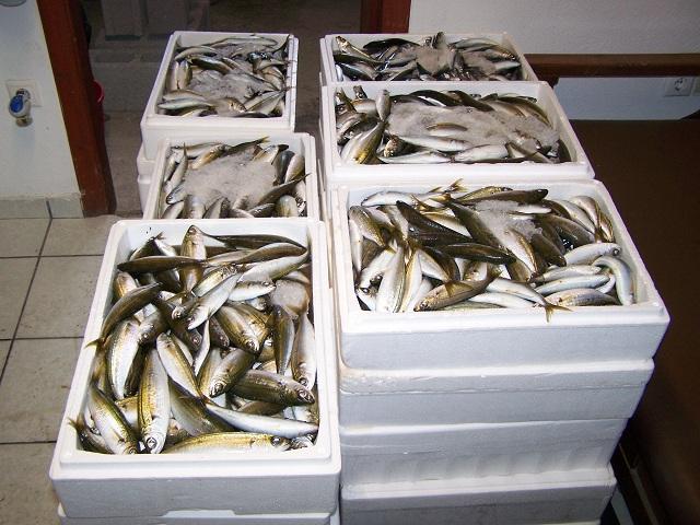 Σε άπορες οικογένειες ψάρια που κατασχέθηκαν στη Σκιάθο