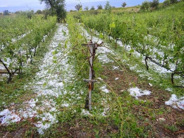 7.000 στρέμματα καλλιεργειών κατέστρεψε η χαλαζόπτωση