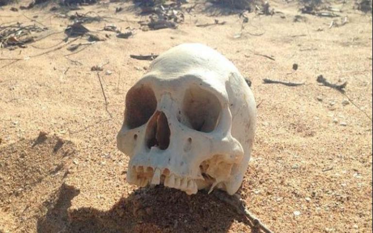 Ανθρώπινο κρανίο και οστό στο βυθό της Αλοννήσου