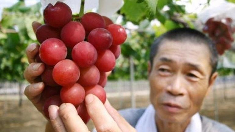 Ιαπωνία: Τσαμπί σταφύλια πουλήθηκε αντί... 10.000 ευρώ!