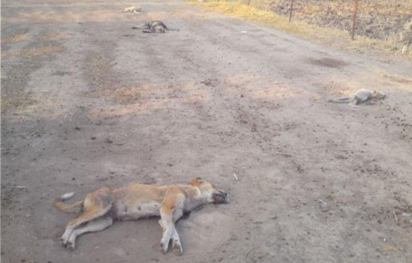 Σκότωσε με φτυάρι το σκυλί της γειτόνισσάς του