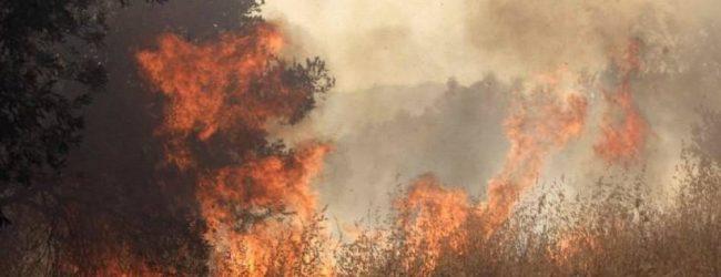 Κάηκαν 85 στρέμματα με καλαμιές στο Νεοχωράκι