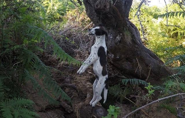 Κρέμασαν με σύρμα σκυλί σε δέντρο στον Αλμυρό