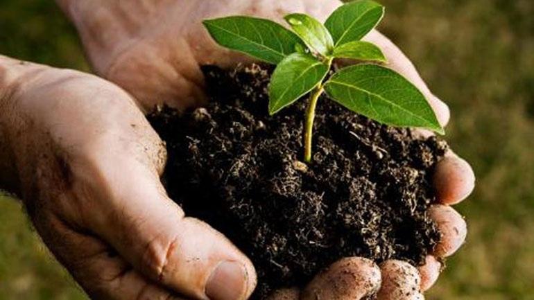 Μεξικό: Φύτευση 18 εκατομμυρίων δέντρων για την καταπολέμηση της ρύπανσης