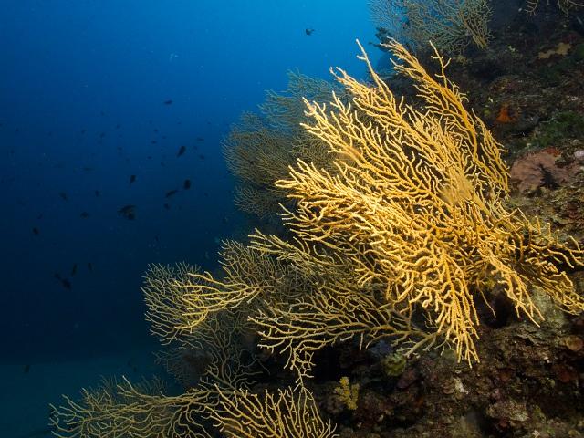 Την προστασία κοραλλιογενούς περιοχής ζητούν οι αυτοδύτες Βόλου