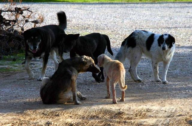 Επιθέσεις αδέσποτων ζώων σε παιδιά