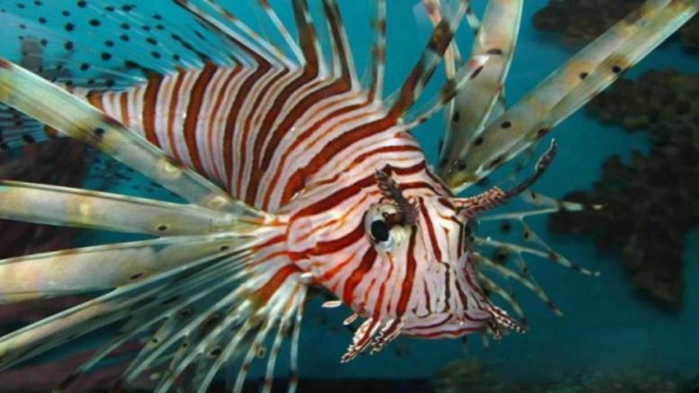 Δηλητηριώδες ψάρι εμφανίστηκε στα νερά της Κρήτης