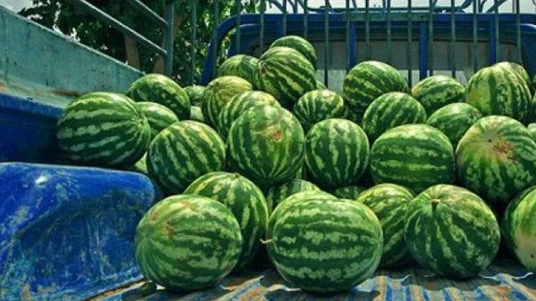 Φόρτωσαν 1.500 κιλά καρπούζια από χωράφι και συνελήφθησαν στην Εθνική